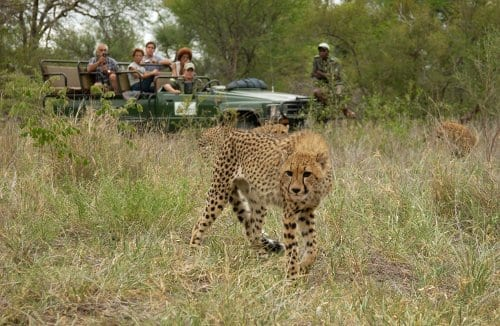 ALTAI™ Spotlight: Tokkroos Safari